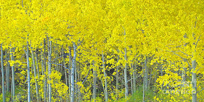 Aspen Power Art Print