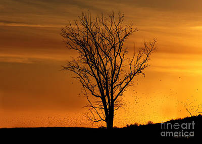 At End Of Day II Art Print by Rhonda Strickland