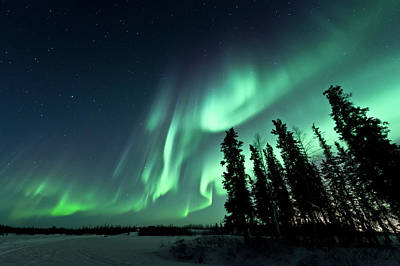 Trees In Snow Photograph - Aurora Borealis by Michael Ericsson