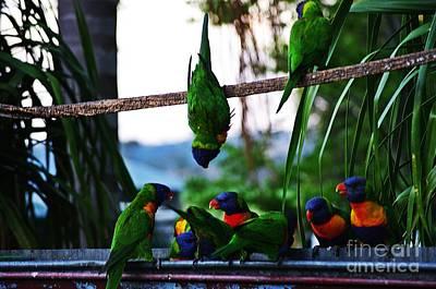 Australia Photograph - Australian Lorikeets by Blair Stuart
