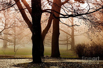 Photograph - Autumn In Park by Kati Finell