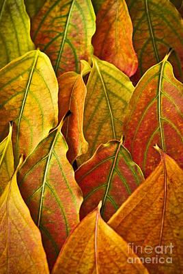 Gradient Photograph - Autumn Leaves Arrangement by Elena Elisseeva