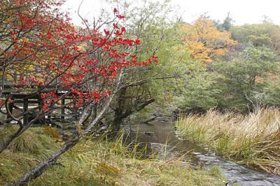 Photograph - Autumn Leaves by Masami Iida