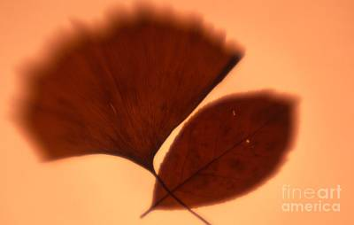 Photograph - Autumn Leaves by Tamarra Tamarra