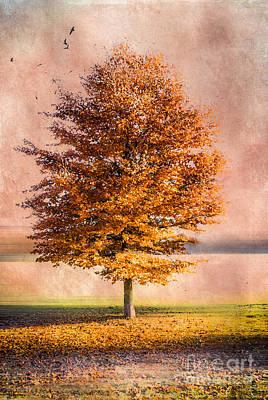 Autumn Light Art Print by Hannes Cmarits