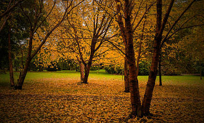 Photograph - Autumn by Micael  Carlsson