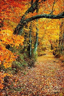 Photograph - Autumn Pathway by Cheryl Davis