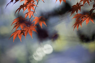 Watercolor Typographic Countries - Autumn Red  by Rob Travis
