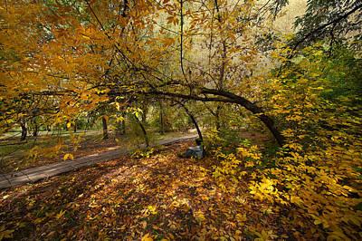 Designs In Nature Digital Art - Autumn Tree by Svetlana Sewell