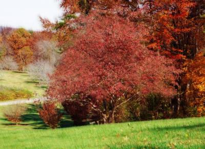 Photograph - Autumn Trees by Sandy Keeton