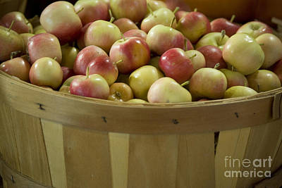 Photograph - Autumn's Bounty by Jim And Emily Bush