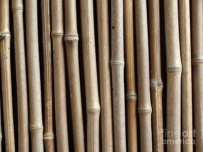 Bamboo Fence Art Print by Yali Shi