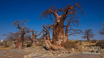 Photograph - Baobab Trees by Mareko Marciniak