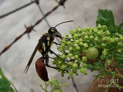 Photograph - Barbed Wasp by Mark Holbrook
