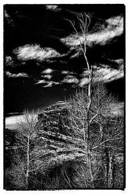 Photograph - Bare Trees At Red Rocks by David Patterson
