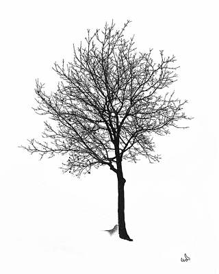 Bare Winter Tree Art Print