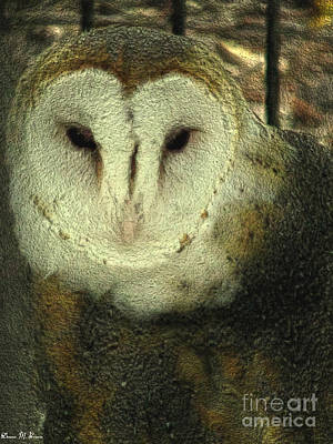 Barn Owl  Art Print by Donna Brown