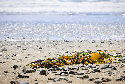 Seaweed Photograph - Beach Detail On Pacific Ocean Coast by Elena Elisseeva