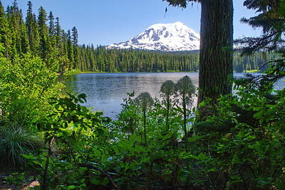 Photograph - Beargrass At The Lake by Ansel Price