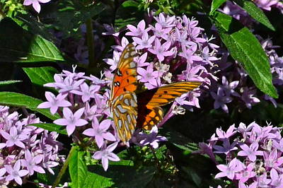 Photograph - Beautiful Butterfly by Carol  Bradley