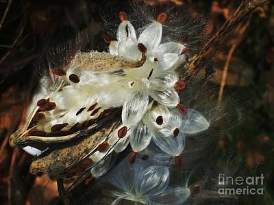 Art Print featuring the photograph Beautiful Nature 2 by Jasna Gopic