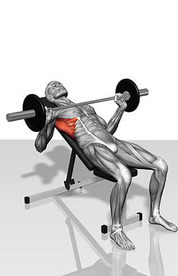 Human Body Part Photograph - Bench Press Incline (part 2 Of 2) by MedicalRF.com