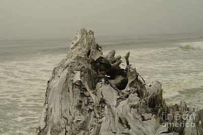 Driftwood Beach Fog Wall Art - Photograph - Big Driftwood  by Jeff Swan
