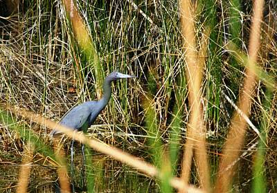 Art Print featuring the photograph Bird At Viera by Jeanne Andrews