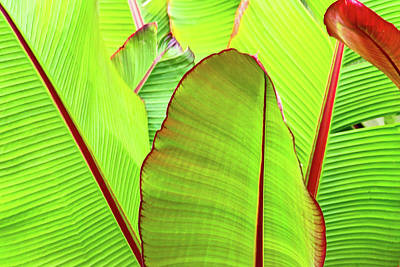 Photograph - Bird Of Paradise by Ann Murphy