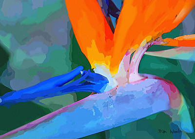Digital Art - Bird Of Paradise by Fran Woods