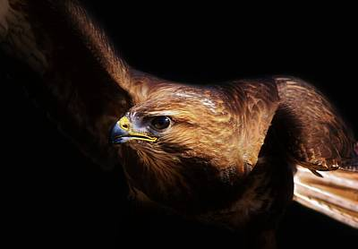 Bird Of Prey Art Print by Paulette Thomas