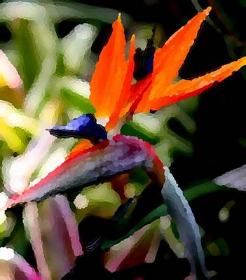 Photograph - Birds Of Paradise  by Elizabeth  Doran