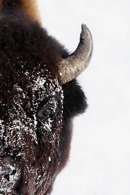Bison In Winter Art Print by Richard Wear
