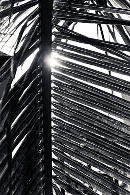 Photograph - Black And White Palm Frond by Anthony Doudt