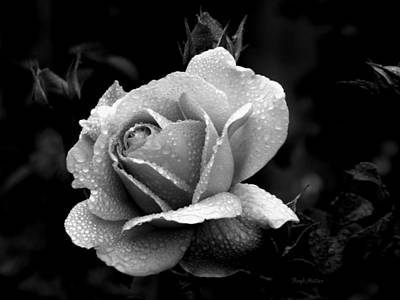 Photograph - Black And White Rose by Boyd Miller