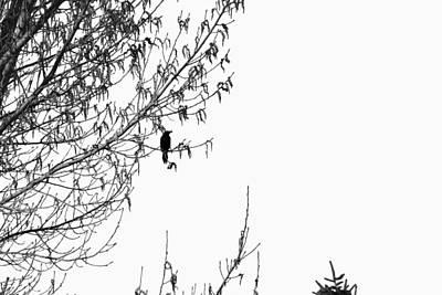 Wall Art - Digital Art - Black Bird by Bill Kennedy