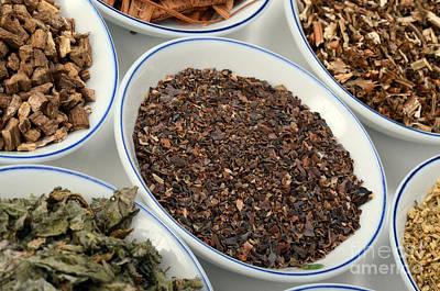 Bladderwrack Herb Art Print by Photo Researchers, Inc.