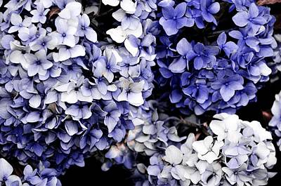 Blue Bloom Cluster  Art Print by JAMART Photography