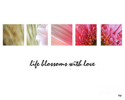 Photograph - Blossoms by Traci Cottingham