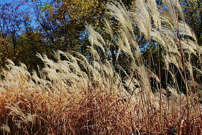 Blowing In The Wind Art Print by Bruce Bley