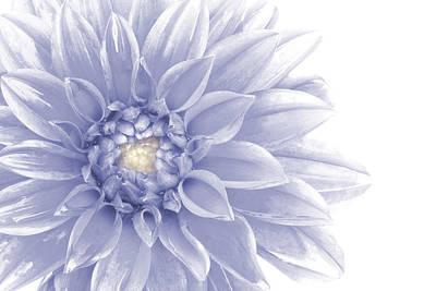 Photograph - Blue Dahlia by Al Hurley