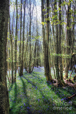 Photograph - Bluebell Woods by Lee-Anne Rafferty-Evans