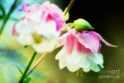 Blurred Beauties Art Print by Shirley  Taylor
