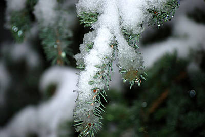 Bokeh Of Evergreen In Snow Art Print
