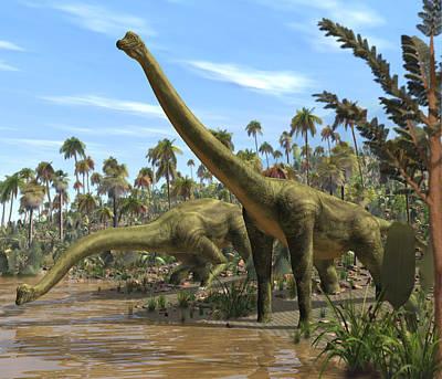 Brachiosaurus Photograph - Brachiosaurus Dinosaurs by Roger Harris