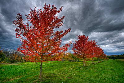 Shelburne Falls Photograph - Bright Red by Mike Horvath