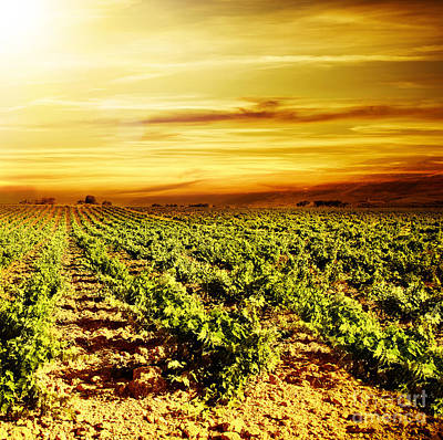 Bright Sunset At Vineyard Art Print by Anna Om
