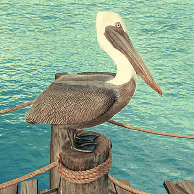 Digital Art - Brown Pelican by Walter Colvin