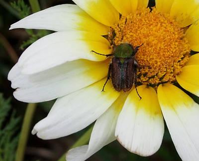 Photograph - Bug by Steve Mangan