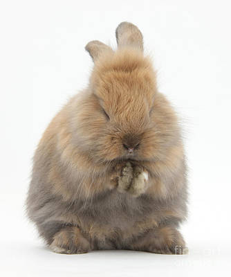 Photograph - Bunny Grooming by Mark Taylor